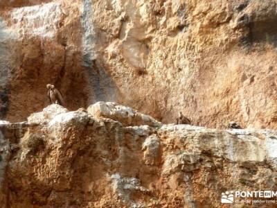 Hoces y cañones del Río Piedra y del Río Gallo -- Laguna Gallocanta  - Fotografía naturaleza;fot